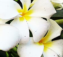 White Plumeria Art - Tropical Breeze by Sharon Cummings