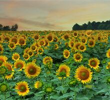 Sea of Sunshine by Lori Deiter