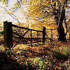 Autumn Gate by Nigel Bangert