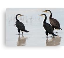 Three Cormorants Canvas Print