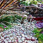 Munchkin Field by Rob Atkinson