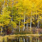 Beaver Pond Reflections by Jim Stiles