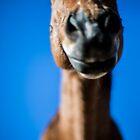 The Happiest Horse by Jonathan Melicharek