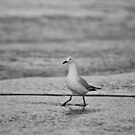 The Gulls - #3 by ExposureTherapy