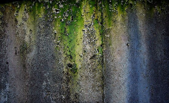 Moldy, Lichen Coverd Water Tank by Frederick James Norman