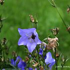 Harebells with Bee by Annie Altherr