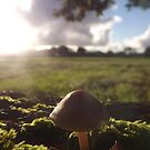 Mushroom by graceloves
