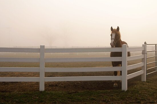Fenced by Mary Ann Reilly