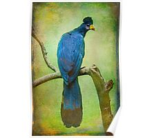 Finer Feather Friends- The Grand Tufted HuttonBird Poster