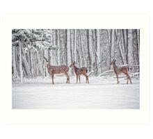 Winter Visit Art Print