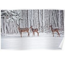 Winter Visit Poster