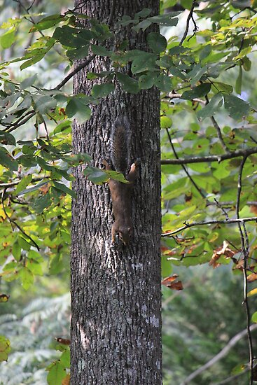 Squirrell Down a Tree by JeffeeArt4u