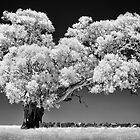 Infrared tree - front view by Hans Kawitzki