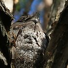 The Art Of Camouflage by byronbackyard
