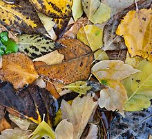Leaves in Josie's Pond by Kim Barton