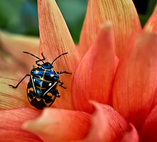 Fashion-conscious bug by Celeste Mookherjee