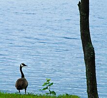 One Goose, One Sapling, One Tree by Nazareth