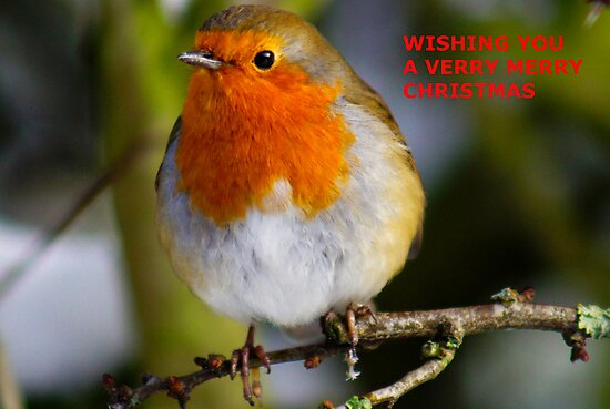 A ROBIN CHRISTMAS CARD by TREVOR34