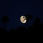 Moon rise over palm trees by Michiel Meyboom