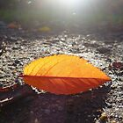 Autumn Leaf by Vicki Spindler (VHS Photography)