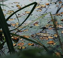 Leaves on water by JonasAlbus