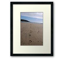 Dog pawprints in sand on beach, Salcombe, Devon, United Kingdom Framed Print