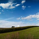landscape with swallow by NafetsNuarb