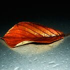 Leaf by Nigel Bangert