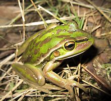 Green and Golden Bell Frog by EnviroKey