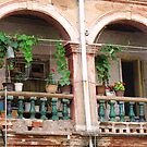 Balcony Garden © by Ethna Gillespie