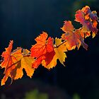 Leafs On A Twig by Diego  Re