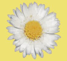 Top View of a White Daisy Isolated on Black Kids Clothes