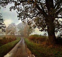 Country Lane by Simon Harris