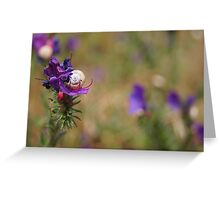 Snail In A Flower Greeting Card