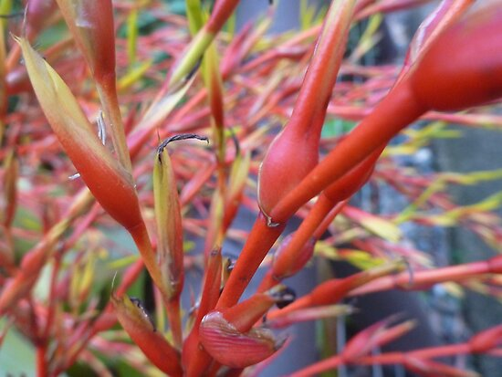 Red Wonder by GorgeousPics