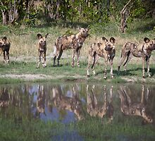 African Wild Dogs by WantedImages