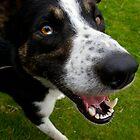 Dog, Deranged Dog by angelvixen