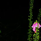 Foxgloves At Night by Andrew Connor Smith