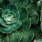 Chlorophyll by brucejn