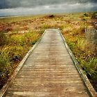 The Walkway by Debra Fedchin