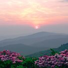 Rhododendron Sunrise iPad Case by Annlynn Ward