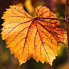 Grape Leaf In Fall by Diego  Re