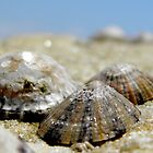 Limpets by Michelle Ricketts