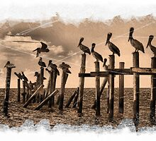 Pelican Roost by Kevin McLeod