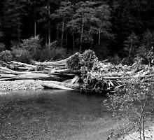 Mt. Baker National Forest, Baker River Trail by Julie Van Tosh Photography