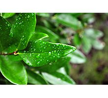 Rain Soaked Leaves Photographic Print