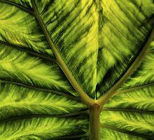 Leaf Patterns by Barbara  Brown