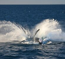 Splash! by Greta van der Rol