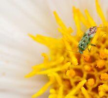 Pollen Lunch by Louis Tsai