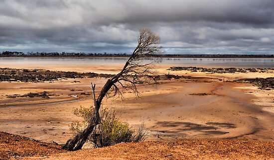 Salt Lake Western Australia by Bev Woodman